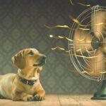 best cooling fans reviews