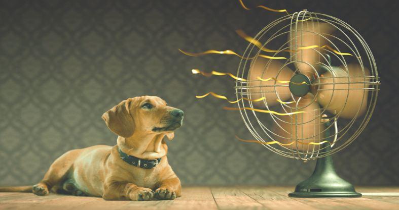 best cooling fans for 2019